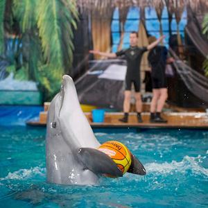 Дельфинарии, океанариумы Иркутска